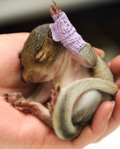 Little Violet (sqirrel) having a broken arm....