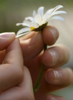 ......loves me.......loves me not.......the secret is with the daisy ;)