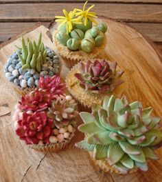 The cupcakes are applecake, the plants and succulents are done...