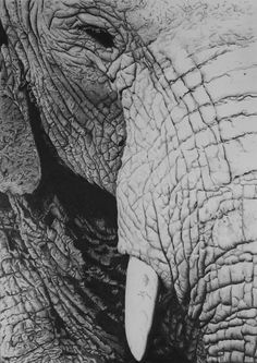 close up drawings | Elephant Close Up Drawing by Adrian Wells - Elephant Close Up Fine Art ...