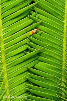 repeating patterns in nature - Google Search