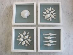 Arrange shells of varying size in frames into artistic designs.  Beautiful.
