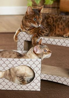 Beige & Brown Out of the Box Cat Scratcher