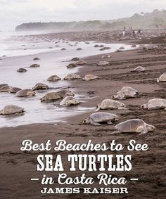 Amazing!! The best beaches to see nesting sea turtles in Costa Rica.