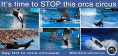 Stop the orca circus!