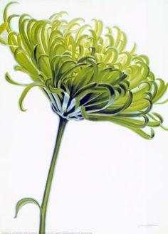 Google Image Result for http://cache2.artprintimages.com/p/LRG/22/2205/ZDCAD00Z/art-print/annemarie-peter-jaumann-green-chrysanthemum.jpg