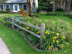 Split-rail fence, stella d'oro daylilies and spirea in the foreground, the only plants in the front bed that receive any direct sun, and only for a few hours in the afternoon.