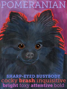 Marvelous Pomeranian Does Your Dog Measure Up and Does It Matter Characteristics. All About Pomeranian Does Your Dog Measure Up and Does It Matter Characteristics. Spitz Pomeranian, Pomeranian Facts, Black Pomeranian, Cute Pomeranian, Pomeranians, Chihuahuas, I Love Dogs, Puppy Love, Cute Dogs