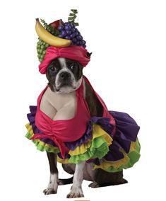 Best Funny Pet Costumes | The Totefish Blog