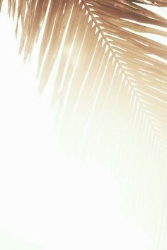 golden palm | Beach | Surf | Fashion | Girls | Lifestyle | Wetsuits | www.saltbeat.com