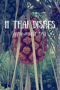 Or more into sweet and sour? Dive into the world of Thai food and be inspired by these epic traditional Thai dishes. These are the 11 Thai dishes you must try! Thai Dishes, Food Dishes, Traditional Thai Food, Best Thai, Hotel Food, Western Food, Bons Plans, Spicy Recipes, Yummy Recipes