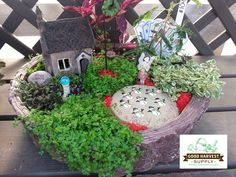 You can even dress up your fairy garden for Christmas!