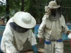Film 19 rus   Passive bees during honey harvest - YouTube