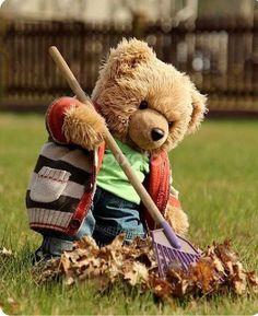 Bear raking the fallen leaves from the lawn cartoon edits Teddy Bear Day, Teddy Bear Cartoon, Cute Teddy Bears, Tatty Teddy, Photo Ours, Teddy Hermann, Teady Bear, Teddy Bear Pictures, Boyds Bears