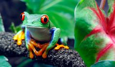Hi my name is maria I going to talk about the disappearing of the rain forest.