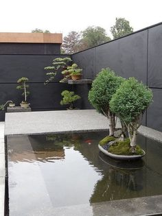 A bonsai garden can give peace and unwinding to everybody in the family. All the exertion that is put into developing and trimming a bonsai tree can make for a superb formed tree that is a gem. Individuals have delighted… Continue Reading → Small Gardens, Outdoor Gardens, Indoor Bonsai Tree, Bonsai Trees, Plantas Bonsai, Small Backyard Design, Japanese Garden Design, Bonsai Garden, Water Garden