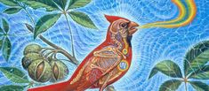 For The Love Of God – The Divine Art Of Alex Grey
