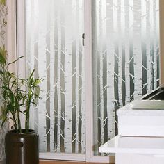 White Birch TREE Forest Frosting Frosted Window Film 24H Privacy Glass 1m /m in Home & Garden | eBay