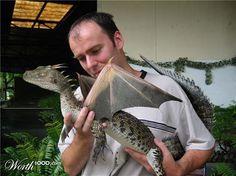Real baby dragon!*