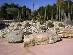 the cactus garden at the Auckland Botanical Auckland New Zealand, Palm Springs, Cactus, Garden, Plants, Prickly Pear Cactus, Garten, Flora, Plant