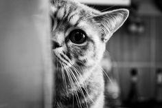 My cat by Nick Ushakov on 500px