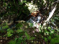 Backroad Planet | Visit 3 Natural Waterfalls in Florida | http://backroadplanet.com