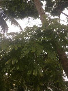 Plants, Plant Identification, Minas Gerais, Plant, Planets