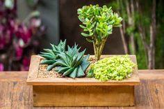 Super fáceis de cuidar, as suculentas são uma ótima alternativa para a decoração de ambientes internos e externos