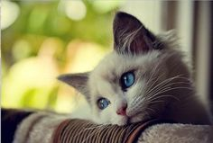Photos droles ou tendres de chats