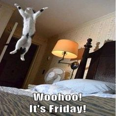 Woohoo It's Friday quotes quote cat friday happy friday tgif days of the week friday quotes its friday