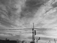 Hundreds of birds line sit on telephone wires even though it is the temperature is far below zero. Telephone, Utility Pole, Zero, Birds, Photography, Fotografia, Fotografie, Phone, Photo Shoot