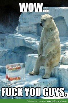 Poor polar bear