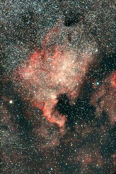 NGC 7000 ~ North American Nebula