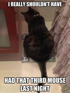fat cat eats mouse