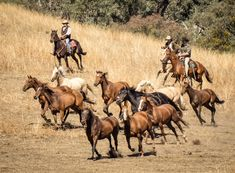 Western Riding, Western Art, Horse Riding, Cowboy Art, Cowboy And Cowgirl, Brumby Horse, Man From Snowy River, Animals Beautiful, Cute Animals