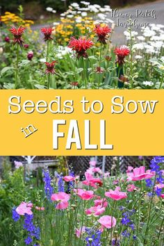 to grow seeds you can sow in Fall for a beautiful flower filled garden next summer. Budget friendly and easy enough for the beginner gardener. Planting seeds in Autumn gives you a head start and fills those bare garden spot easily. Olive Garden, Autumn Garden, Easy Garden, Spring Garden, Spring Summer, Garden Ideas, Autumn Flowers Garden, Cut Flower Garden, Beautiful Flowers Garden