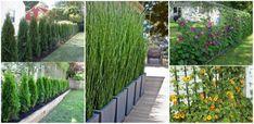 Kerti térhatárolók, ha kerítés helyett zöldellő növényekre vágysz, ezek az ötletek tetszeni fognak!