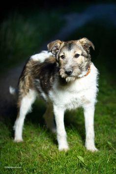 Мышка — Animalsburg.ru Анималсбург #собака #собакаищетпомощь #собакаищетдом #собакаищетхозяина