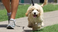 The Next 10 Tips You Should Do To Protect Your Dog Paws From Hot Pavement - If you are a dog owner, you will have many things to worry about, depending on your dog's breed. For example, you should keep your dog cool during the... - .