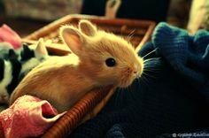 sweet bunny <3