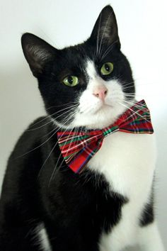 The Perfect Christmas Cat Bow Tie by businesscatual on Etsy, $9.00