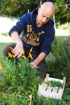 D'un orange flamboyant, l'escholtzia est de culture facile au jardin, et son pouvoir sédatifs apaise les nuits agitées.