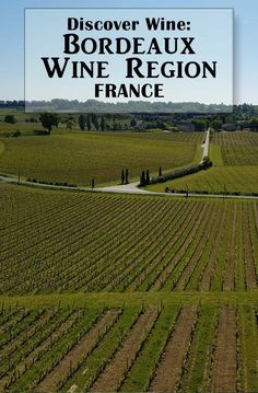 Love wine tasting? Discover the best Bordeaux wines in the Bordeaux wine region of France.