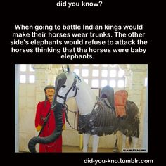 """I wonder what the horses thought of that: """"Crazy humans..."""""""