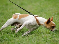 How to Teach Your Dog to Walk Nicely | petMD
