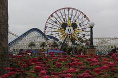 Já visitei várias vezes Walt Disney World em Orlando e Disneyland Resort na Californiae algumas das perguntas recorrentes que recebo são: Vale a pena ir apenas na da California? Se já fui a Orlando vou me decepcionar com a da Califórnia? Conheceu uma, já conheceu a outra?Pois aqui começam os posts sobre a Disneyland Resort …