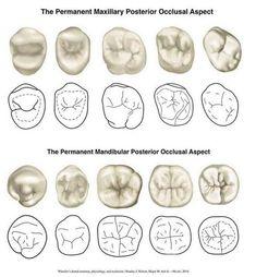 Eight Dental Hygienist Girls Dental Assistant Study, Dental Hygiene Student, Dental Procedures, Dental Hygienist, Dental World, Dental Life, Dental Art, Dental Teeth, Dental Braces