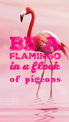 Flamingo iPhone