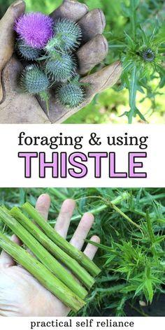 Healing Herbs, Medicinal Plants, Survival Food, Survival Tips, Survival Skills, Herbs For Health, Health Tips, Herbal Medicine, Natural Medicine