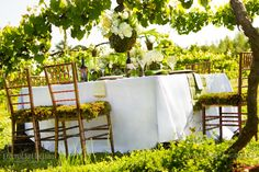 vineyard_wedding_photography_southern_bride_magazine_green_wedding_theme_001